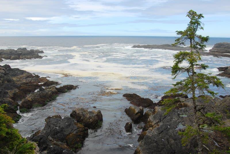 Stillahavsområdetseashore royaltyfria bilder
