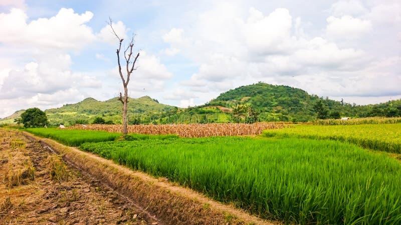 Stille Schönheit in den Rassen zentrale Java Indonesien stockbilder