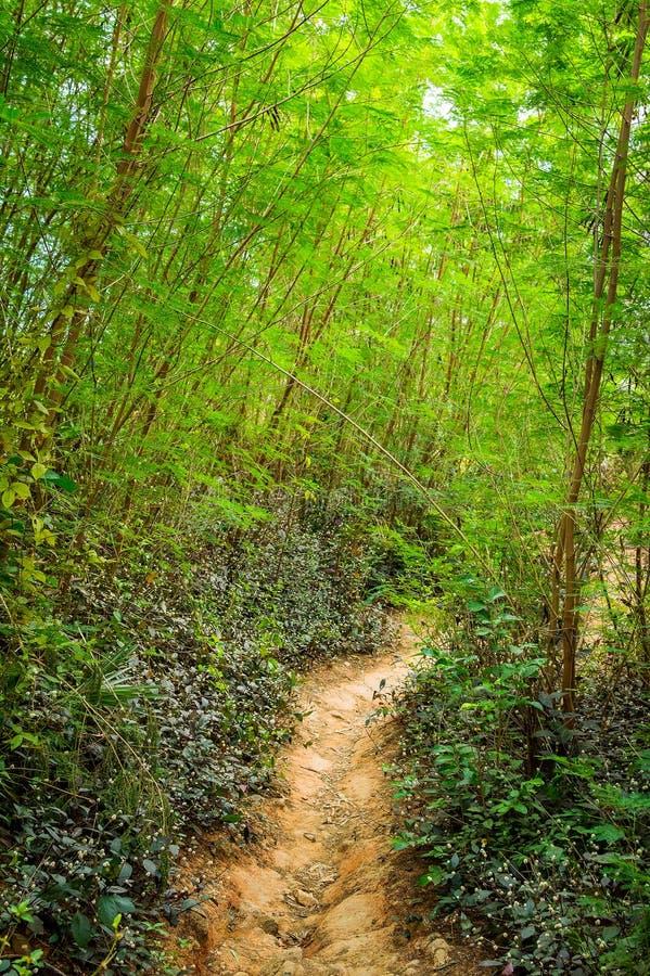 Stille wegweg in het bos in de bergen stock afbeeldingen