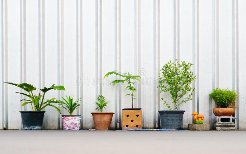 stilleben av olika växter i blomkrukorna utomhus med Co royaltyfri bild