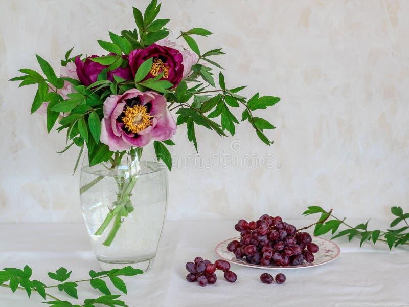 Stilleben med blommor och druvor Rosa och purpurf?rgade pioner i en vas p? en ljus bakgrund royaltyfri fotografi