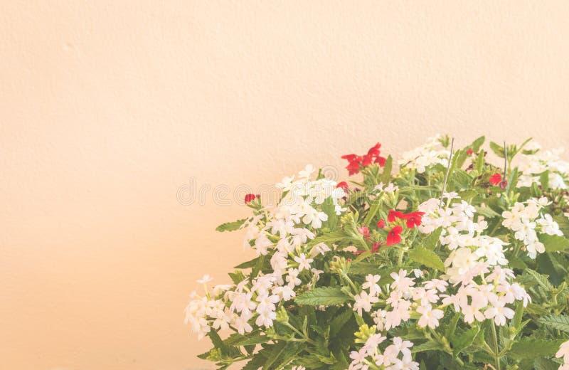 Stilleben med blommor på väggbakgrund royaltyfri bild