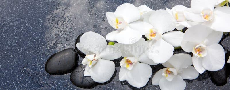 Stilleben med brunnsortstenar och den vita orkidén fotografering för bildbyråer