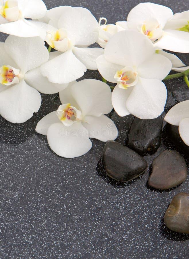 Stilleben med brunnsortstenar och den vita orkidén royaltyfri bild