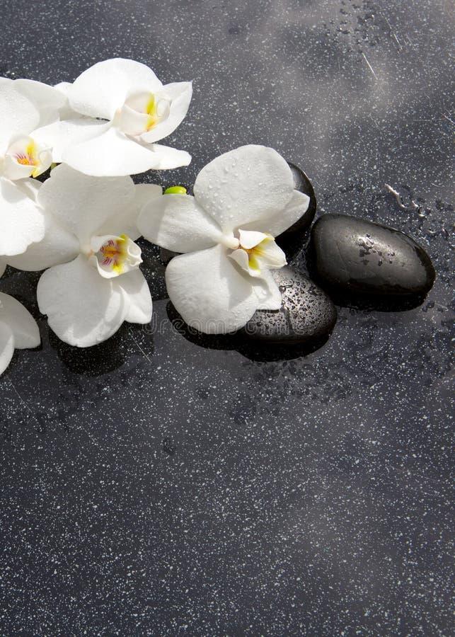 Stilleben med brunnsortstenar och den vita orkidén royaltyfria foton