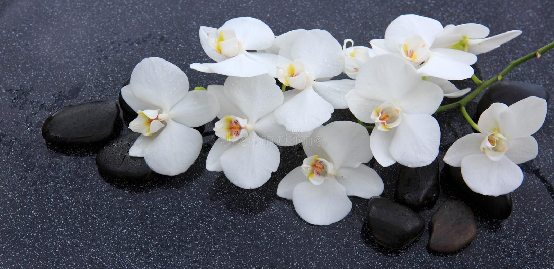 Stilleben med brunnsortstenar och den vita orkid?n arkivfoto