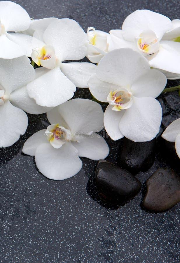 Stilleben med brunnsortstenar och den vita orkid?n royaltyfri fotografi