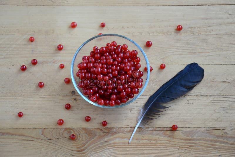 Stilleben med den röda vinbäret fotografering för bildbyråer