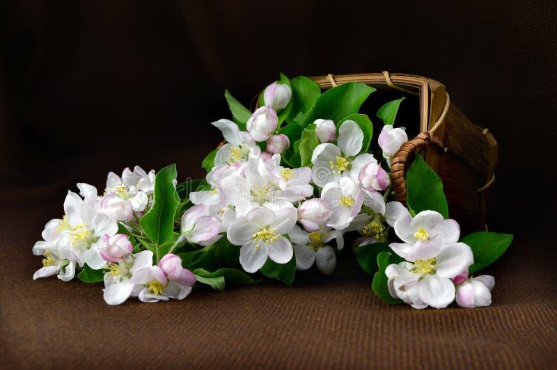Stilleben med en korg av blommaäpplet royaltyfri foto