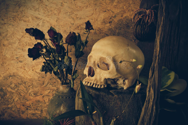 Stilleben med en mänsklig skalle med ökenväxter, kaktus, rosor royaltyfri foto