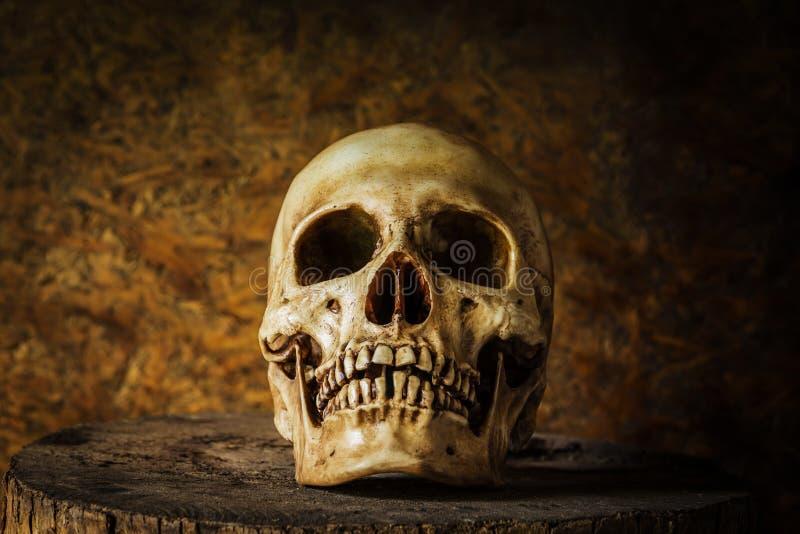 Stilleben med en skalle arkivfoto