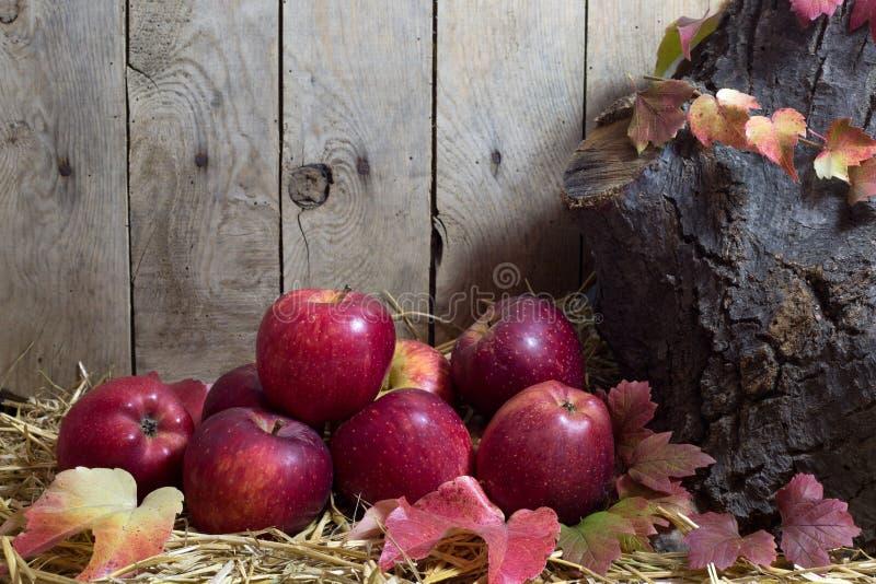 Stilleben med röda äpplen och Autumn Leaves på ett hö, träplankabakgrund arkivbilder