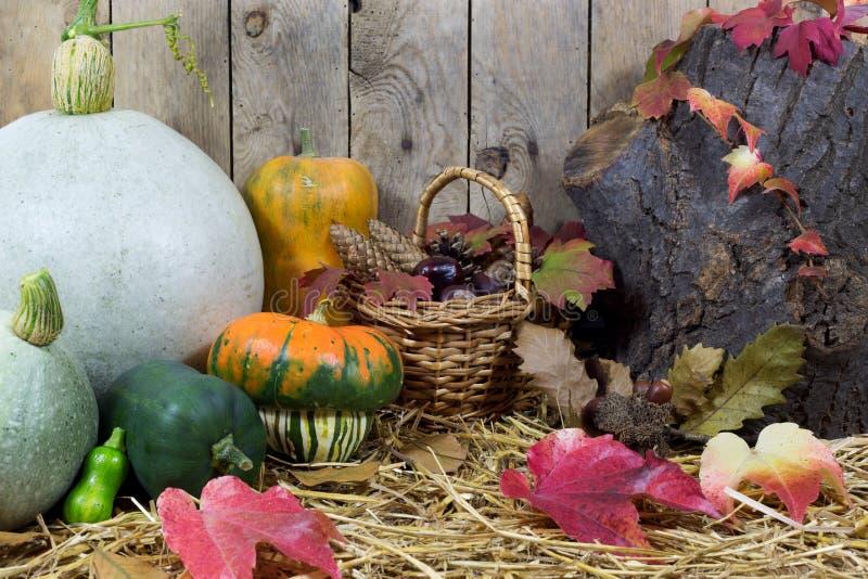 Stilleben med små och stora pumpor, sörjer den vide- korgen som fylls med, kottar, ekollonar, kastanjer och Autumn Leaves på ett  arkivfoton