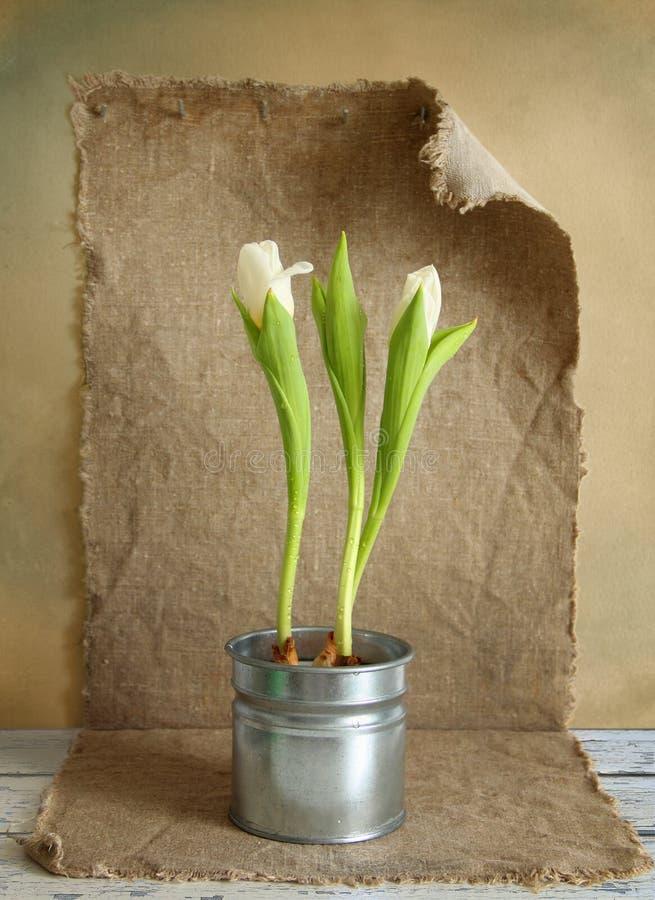 Stilleben med tulpan arkivfoto