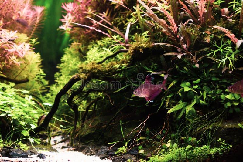 Stilleben som är nära upp av härlig tropisk aquascape, natur Aqu royaltyfria foton