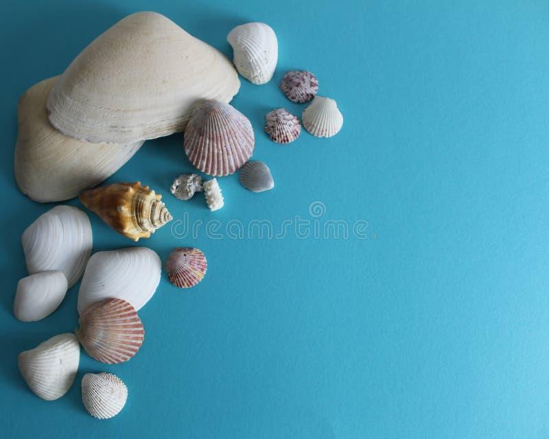Stillebenfoto av snäckskal på turkosbakgrund fotografering för bildbyråer