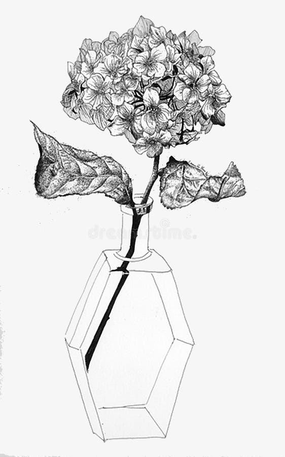 Stillebenteckningen punkterar stil av vanlig hortensiablomman royaltyfri fotografi