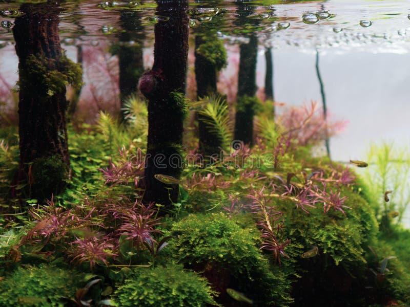 Stilleven dichte omhooggaand van mooie tropische aqua scape, Aard Aqu stock foto