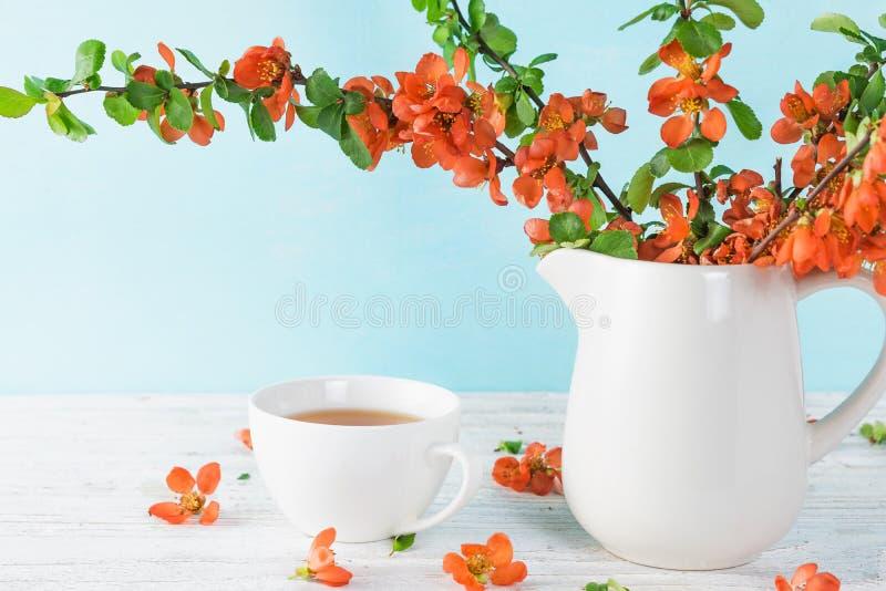 Stilleven met een mooie oranje Japanse kweepeerbloemen en kop thee over blauwe achtergrond met exemplaarruimte royalty-vrije stock afbeelding