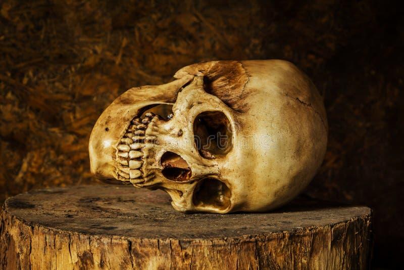 Stilleven met een schedel royalty-vrije stock afbeelding