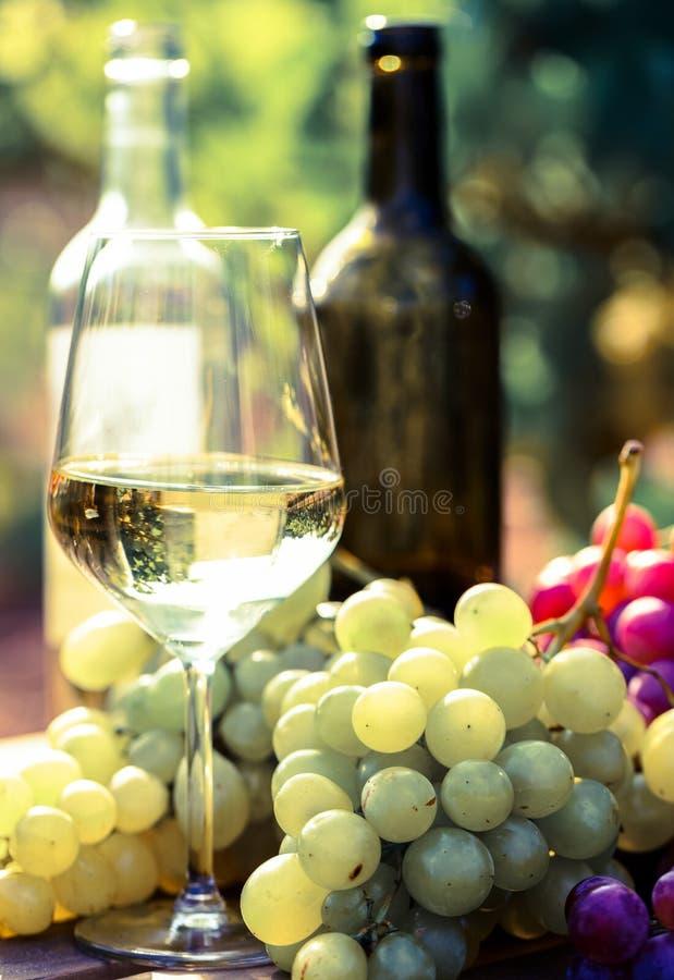Stilleven met glazen rode en witte wijn en druiven op gebied van wijngaard stock afbeelding