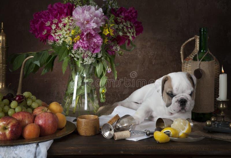 Stilleven met puppyhond in klassieke Nederlandse stijl stock fotografie