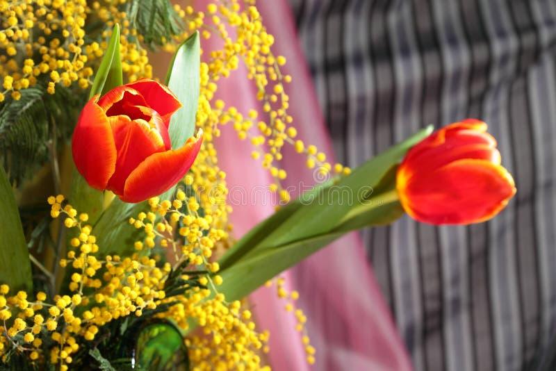 Stilleven met rode tulpen gele geurige mimosa royalty-vrije stock foto's