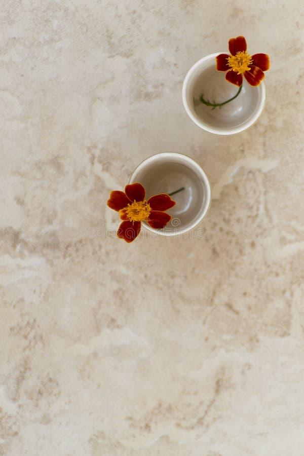 Stilleven met twee goudsbloembloemen royalty-vrije stock afbeeldingen