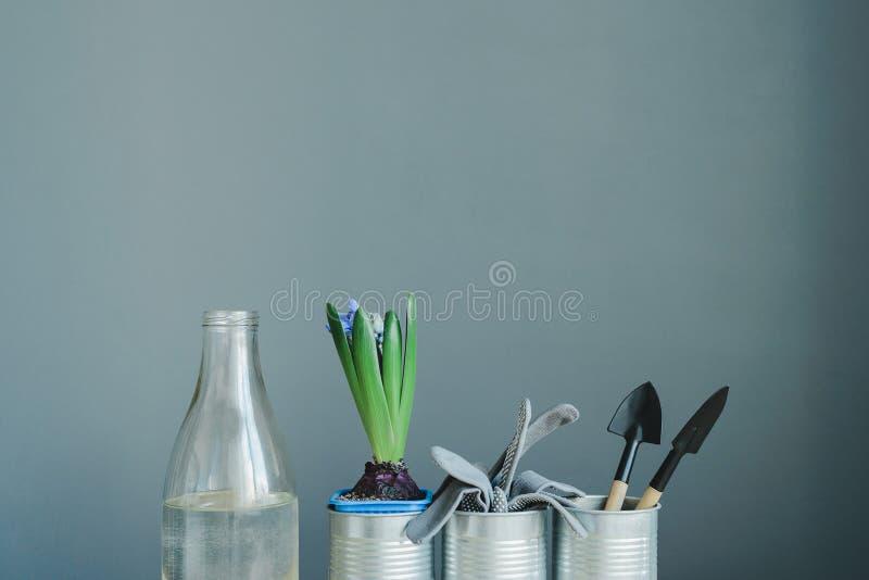 Stilleven van de installatie van de hyacintmengeling, handschoenen en het tuinieren hulpmiddelen in metaalpot en glasfles met wat stock fotografie