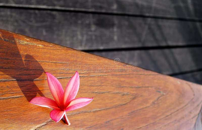 Stilleven van roze bloem op houten terraslijst royalty-vrije stock foto