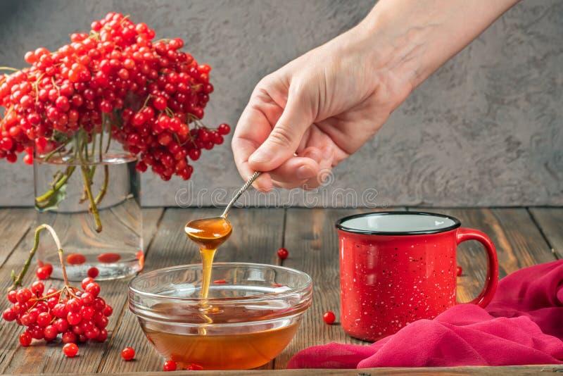 Stillevenbessen van een viburnum in een glas en een mok hete thee en honing royalty-vrije stock afbeeldingen