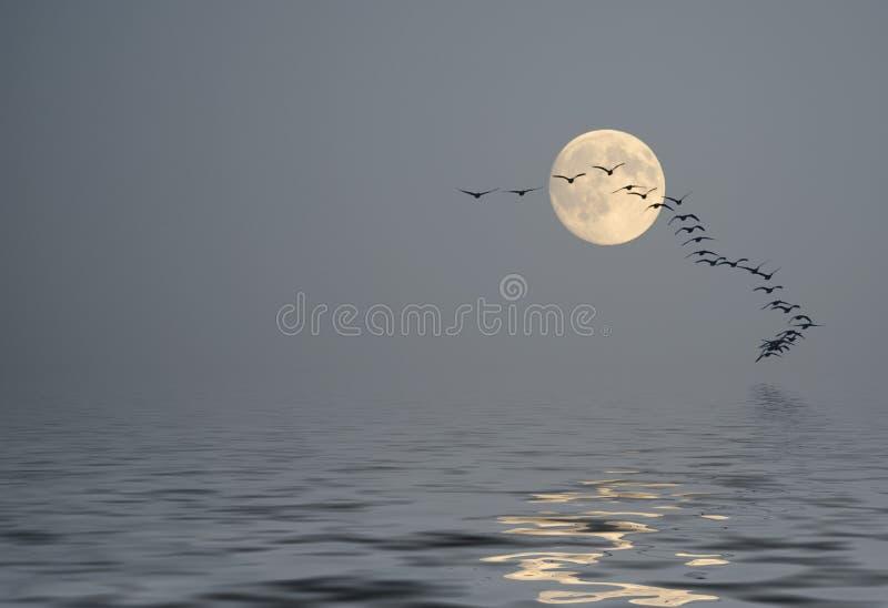 Stillhet över havet på morgondamm royaltyfri illustrationer