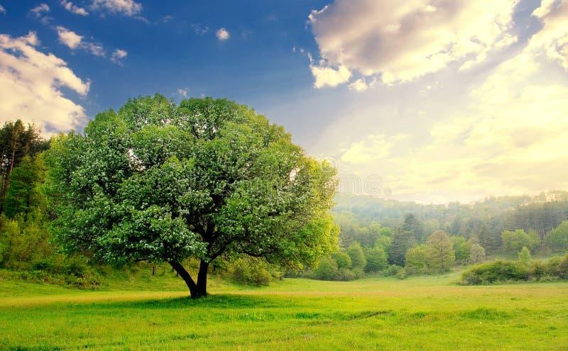 stillhet över solnedgångtree royaltyfri foto