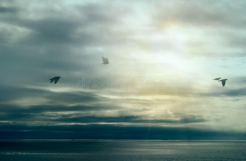 Stillhet efter storm. Fåglar som flyger över havet med stormmoln. Skola göra det arkivbilder