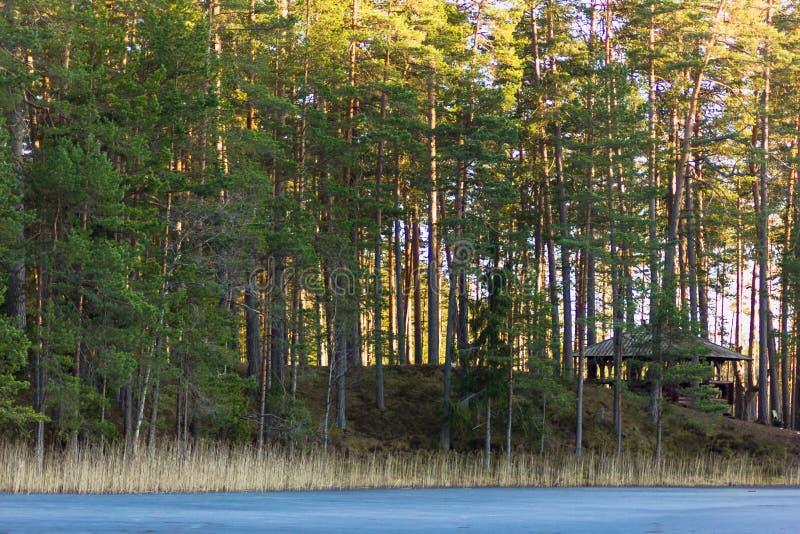 Stillhet och Sunny Spring Day i skogen, med solen som överst skiner arkivbilder