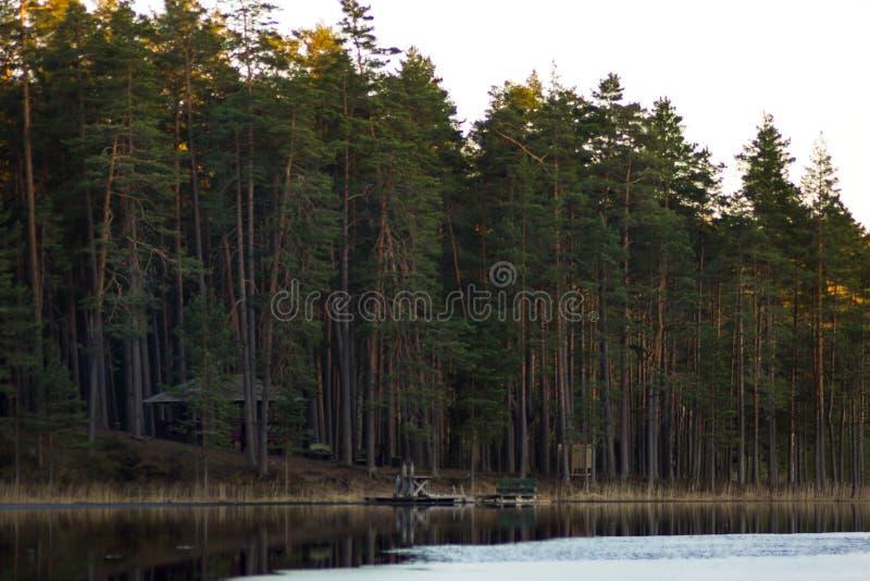 Stillhet och Sunny Spring Day i skogen, med solen som överst skiner royaltyfri foto
