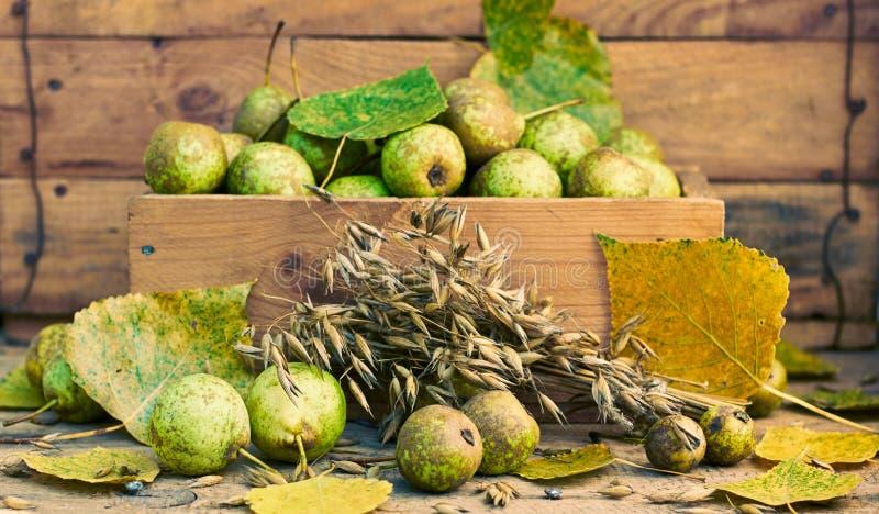 Stillleben aus Birnen, Haferkörnern, Kopf und Fallblättern lizenzfreies stockbild