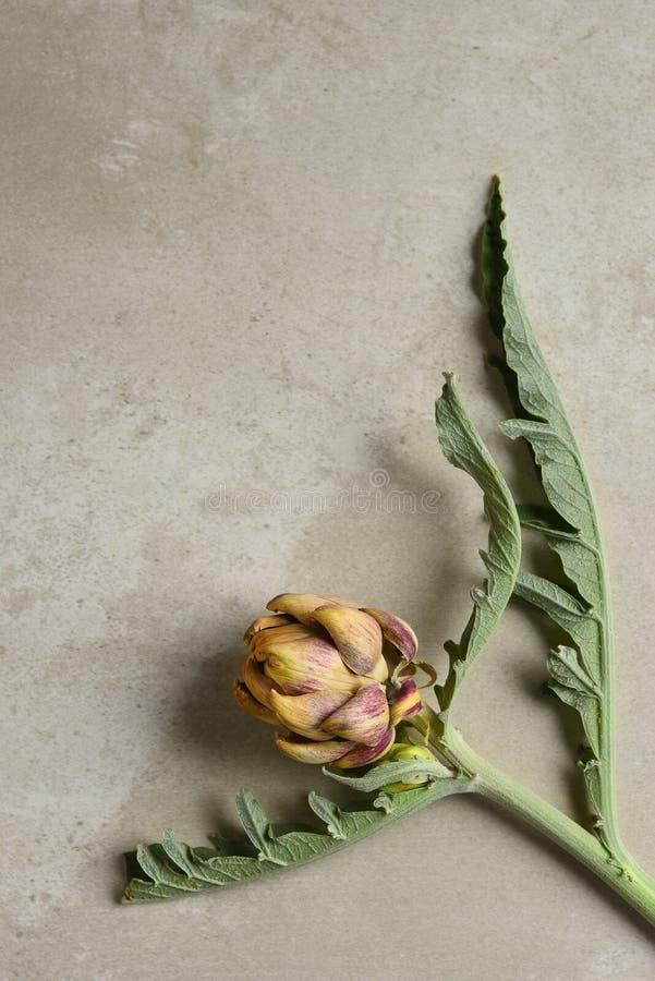 Stillleben einer kleinen getrockneten Artischockenkugel auf seinem Stamm mit Blättern lizenzfreie stockfotografie