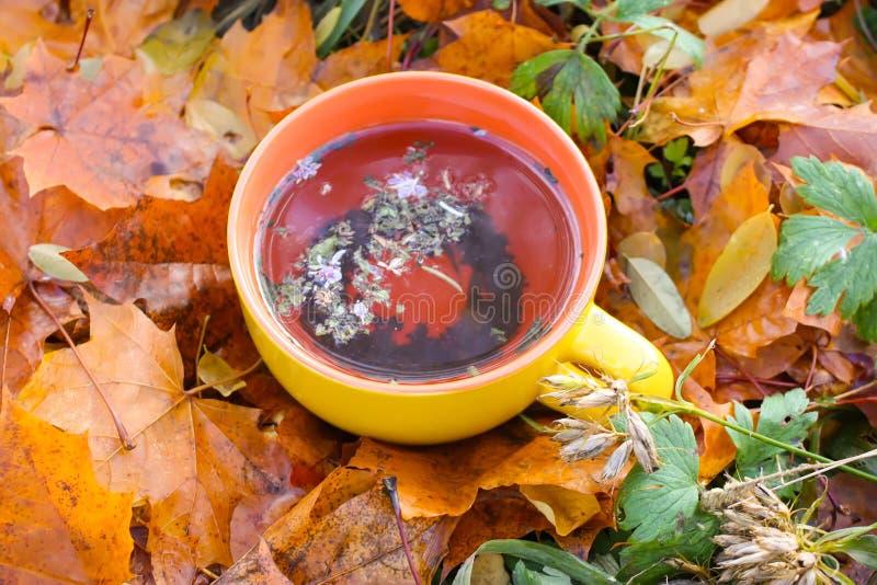 Stillleben mit großer keramischer Tasse Tee und Fallblätter im Herbstgarten stockbilder