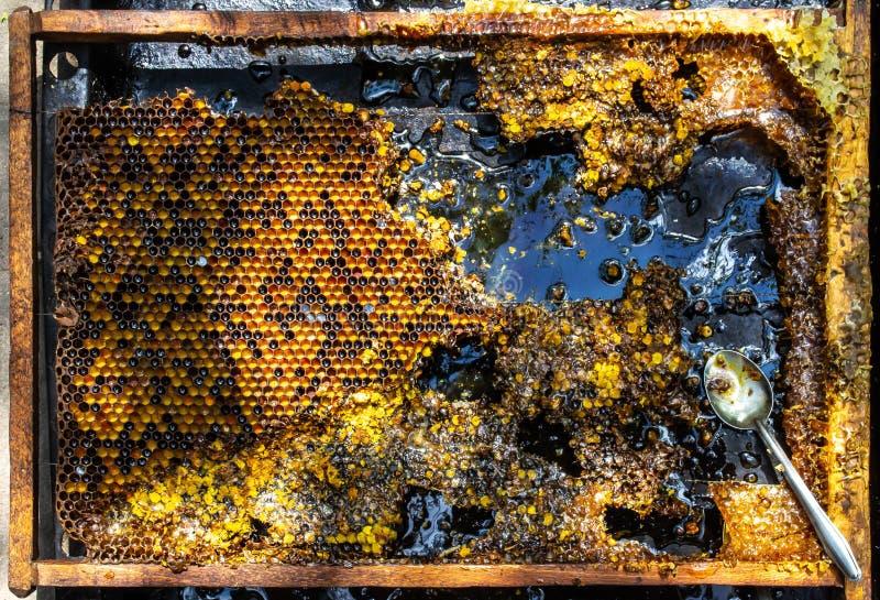 Stillleben mit Honigkammrahmen und kleinem Stahllöffel auf schwarzem Hintergrund stockfotografie