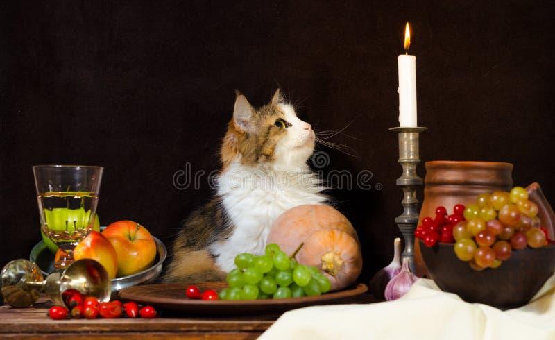 Stillleben mit Katzenkürbis-Traubenhund stieg grüne Flaschentrauben stockfotos