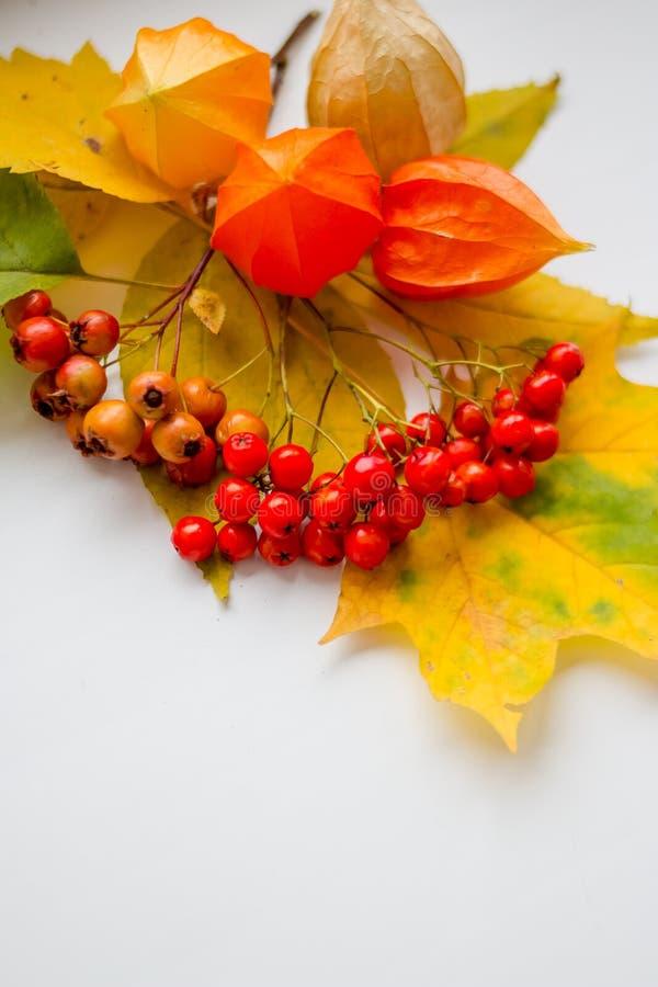 Stillleben von bunten Blättern Herbststillleben, Kopienraum, weißer Hintergrund, Herbstzusammensetzung Des Herbstes Leben noch lizenzfreies stockbild