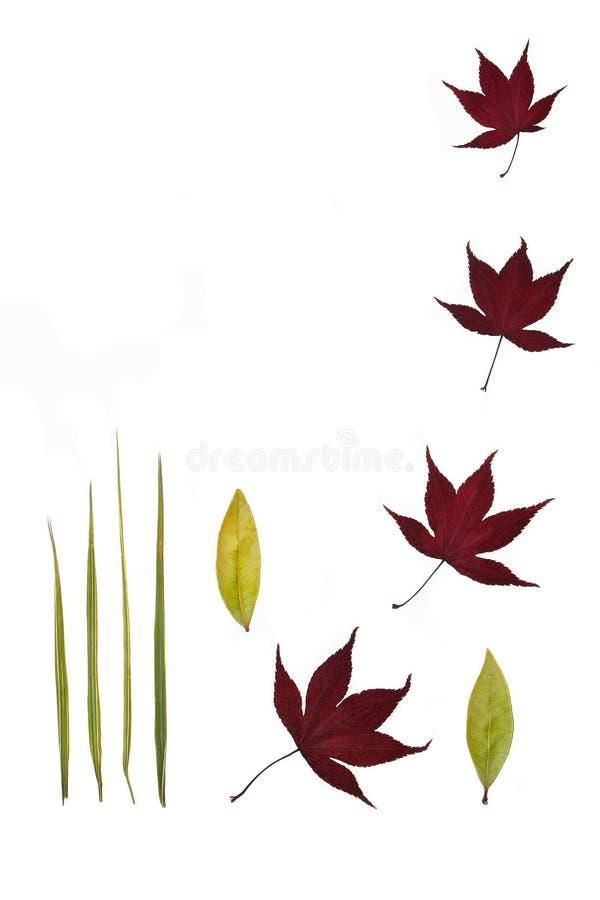stillness листьев иллюстрация штока