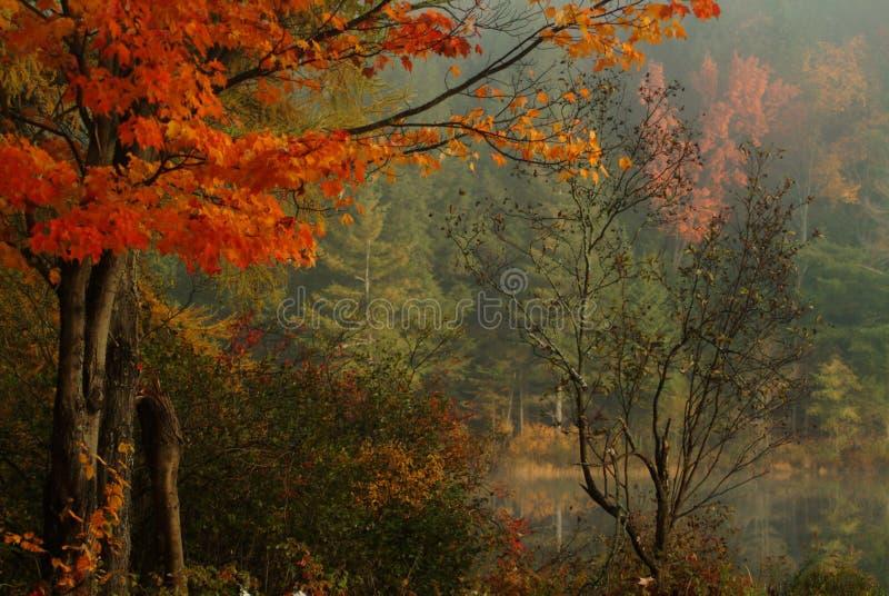 Download Stillness of Fall stock photo. Image of forest, muskoka - 164600