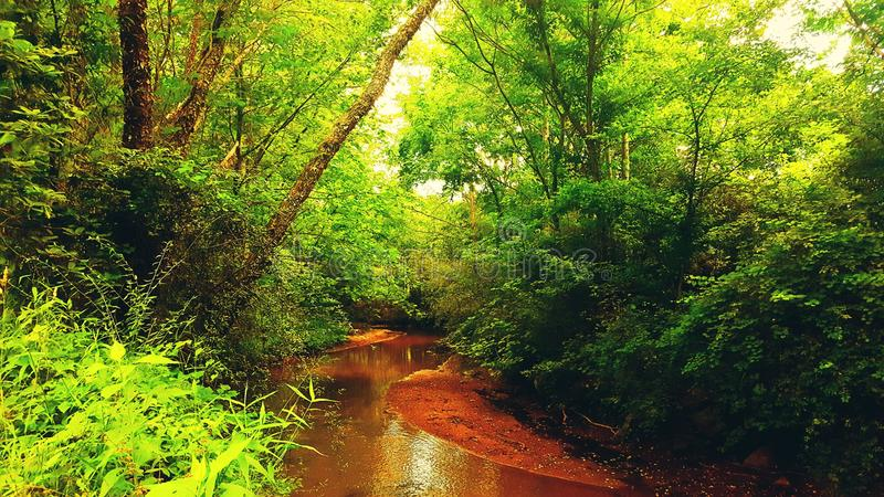 Stillsam flod arkivbilder