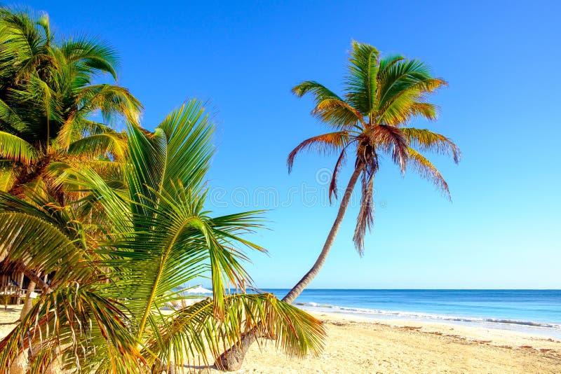Stillsam scenisk sikt av sommarstrandlandskapet med palmträd arkivbild
