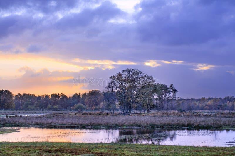 Stillsamma kärr med färgrik himmel och träd reflekterade i vatten på solnedgången, Turnhout, Belgien royaltyfri foto