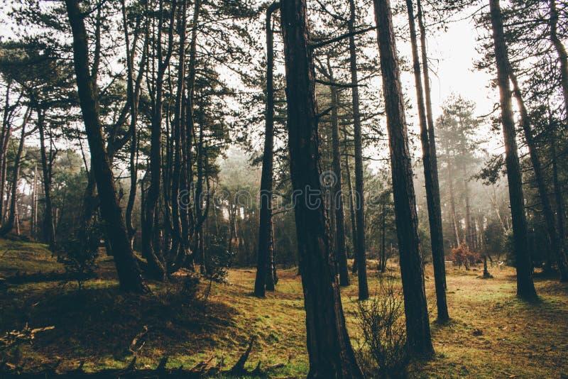 Stillsamma morgnar i skogarna f England royaltyfri foto