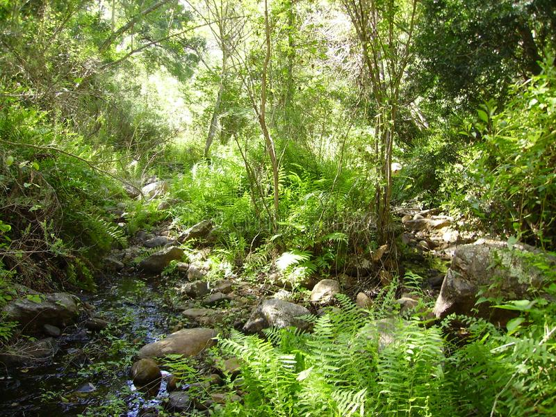 Stillsamma Rivier i en Forrest Background arkivbild