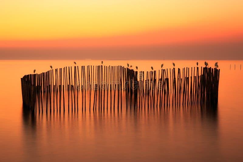 Stillsamt bildfoto av solnedgång- eller aftontid på havet eller havet royaltyfri foto